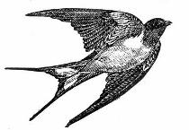 bird-graphics-clip-art (210x145)